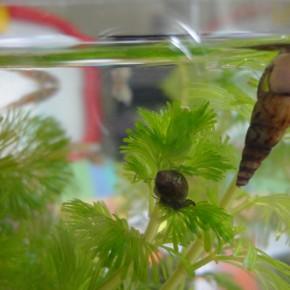 Our little aquatic pets