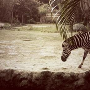Our best experience in Bali - Bali Safari & Marine Park