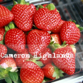 Day 1: A relaxing day at Cameron Highlands