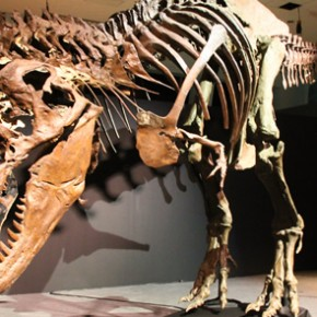 Part 2: Titans of the Past - Dinosaurs and Ice Age Mammals