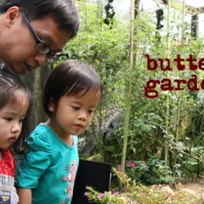 Day 2: Butterfly Garden, Cameron Highlands