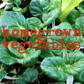 Our homegrown vegetables