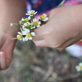 Wild flowers and pine cones